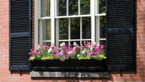 Stylish-Window-Accessories